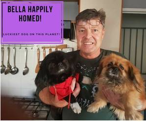 Happy Tails Pekingese Rescue Of South Africa