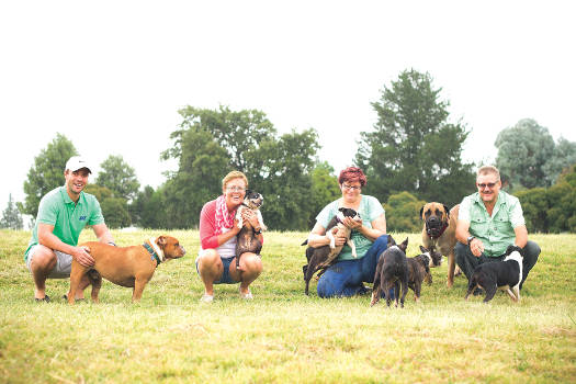 Boston Terrier Rescue SA foster parents from left to right: Dirk Griesel with Face, Marissa Griesel with Maggy Mouse, Izane Cloete-Hamilton with Joany, Benjamin and Ruben, and Freddy Hamilton with Queenie (Boerbull) and TinTin