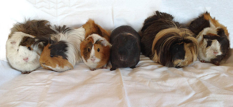 Left to right – Cotton, Pippen, Boo, Boris, Milly the Mop and Tuksie