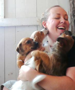 Volunteer Jenni Davies getting some love from the pack of 'Maltirussellhunds'