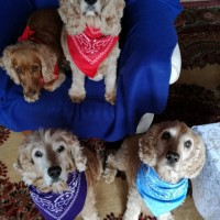 Gracie, Pearl, Chan and Giz...